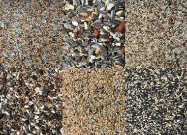 Bird seed mixes