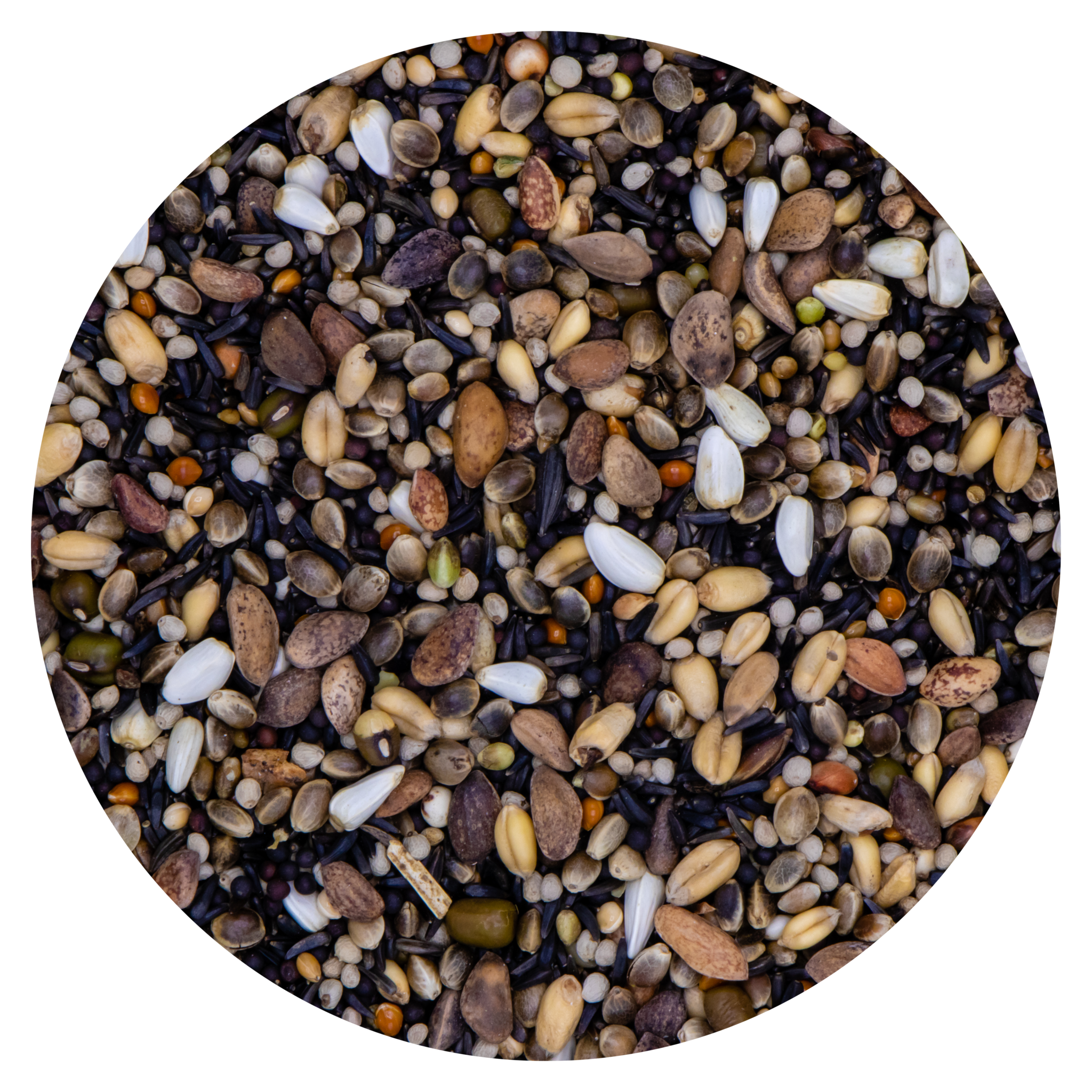 VDC VDC Germination Seeds Goldfinches 219