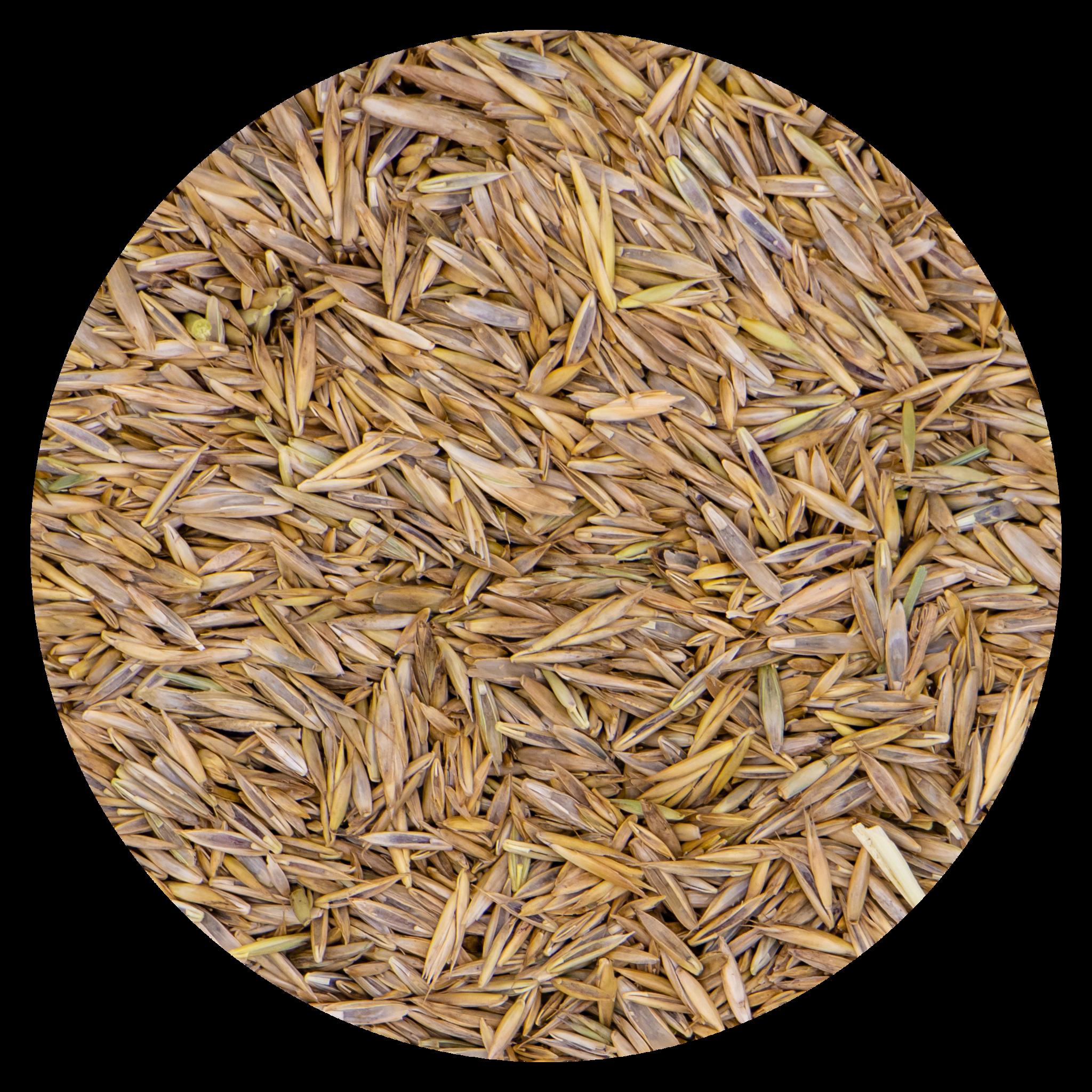 Grass seeds Rapide