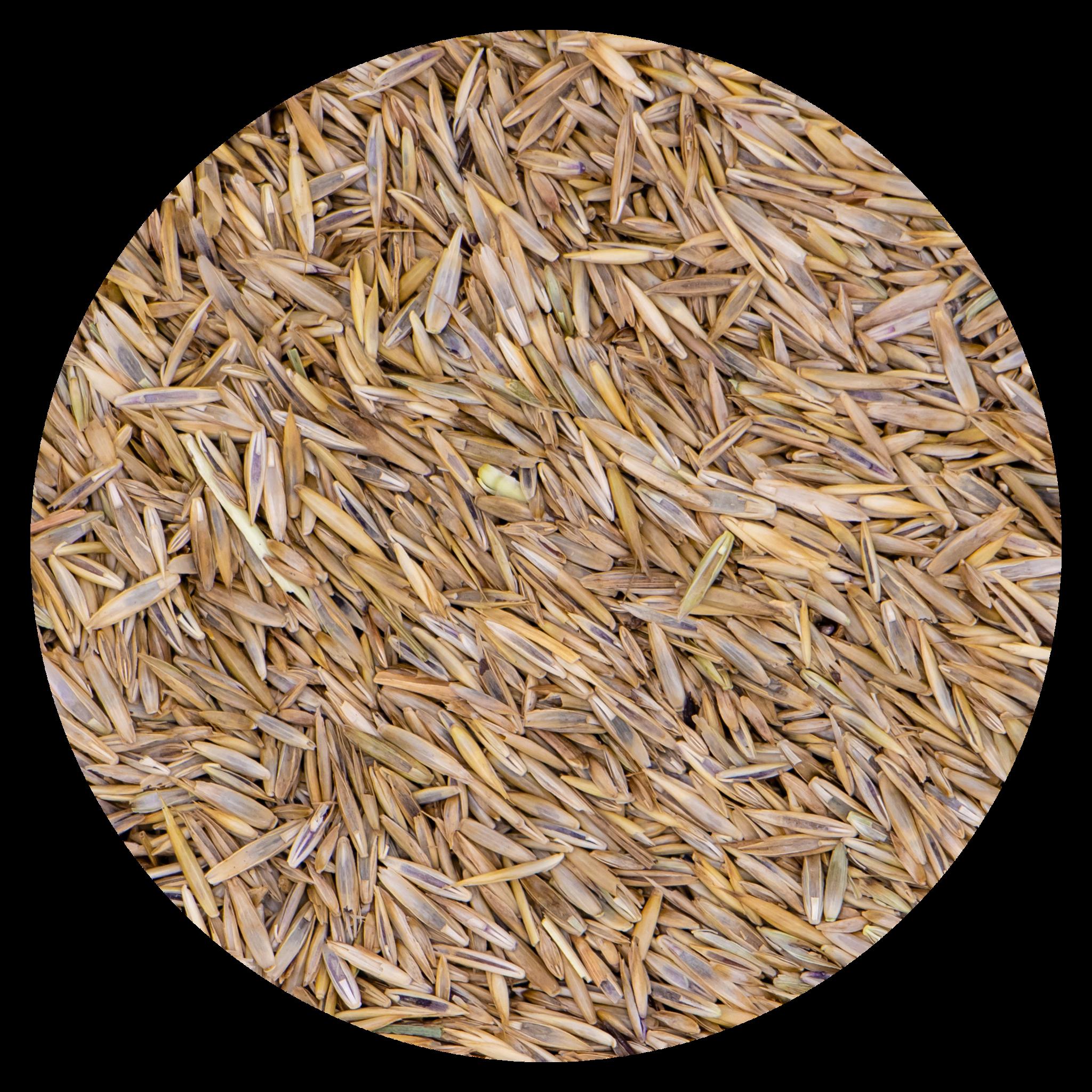Grass seeds Sport