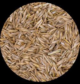 Grass seeds Pasture