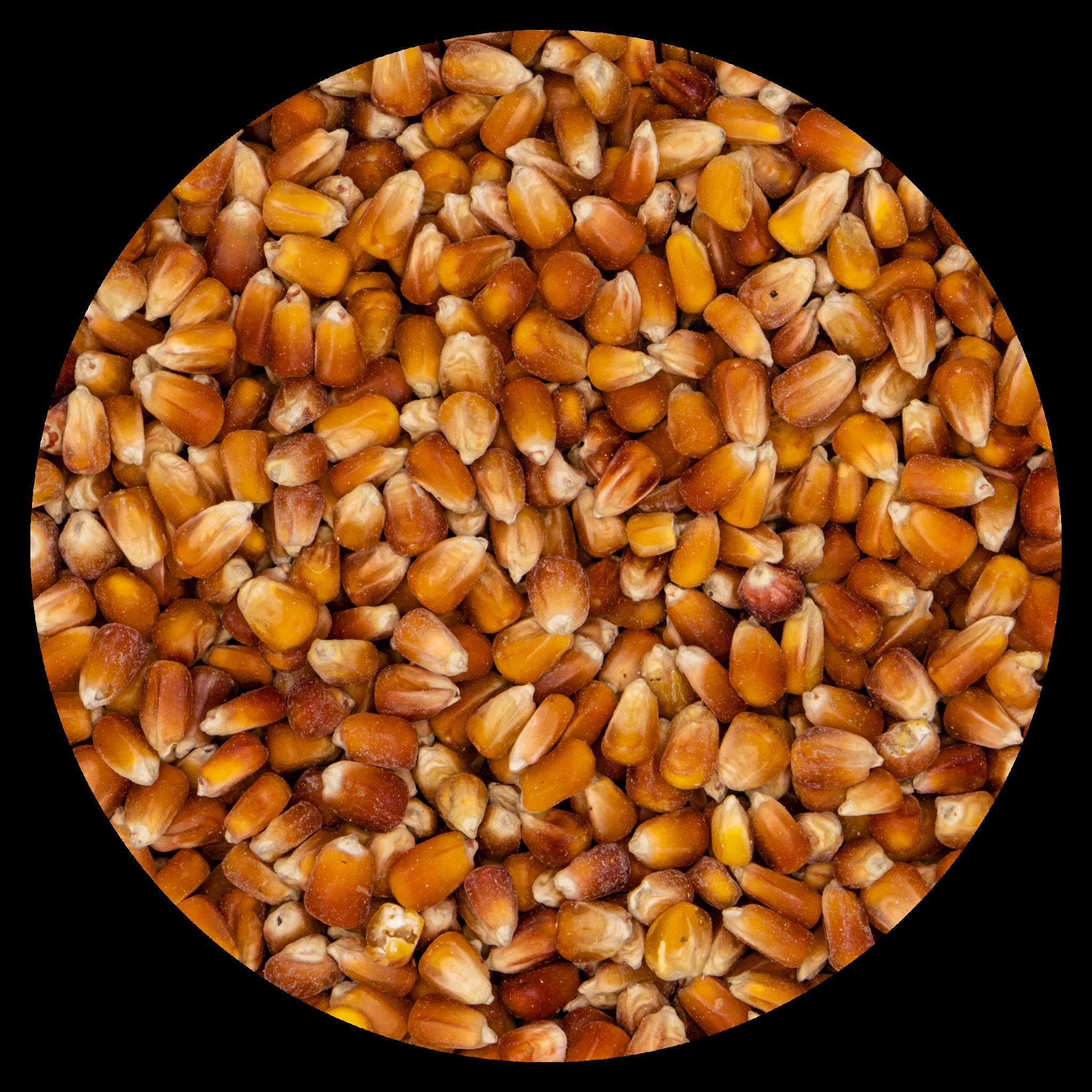 VDC VDC Maïs - Oranje