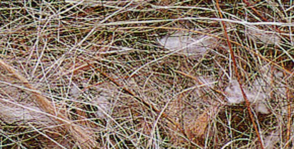 Sisal fibre Sisal Fibre ANIMAL-VEGETABLE 500 gr