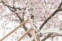 tokyobike - Bisou Limited