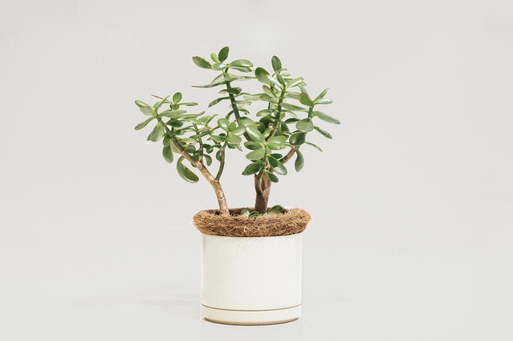 Hasami Hasami Planter