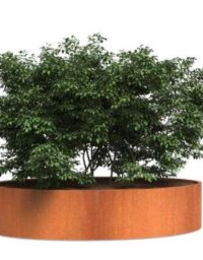 Cortenstaal Plantenbak Ovaal/Elipse
