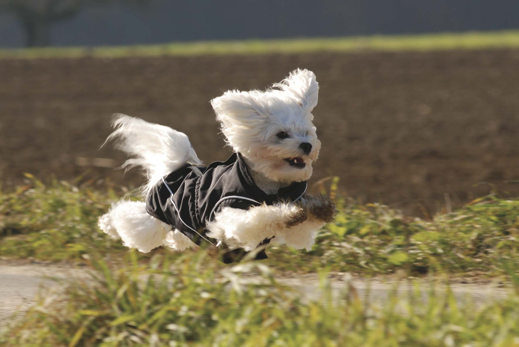 Dog Bite honden regenjas vrije beweging