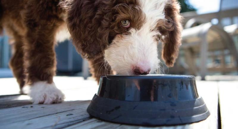 Ziwipeak Hond eet uit voerbak
