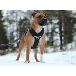 DOG Copenhagen DOG Copenhagen Comfort Walk Pro Harness / Tuig
