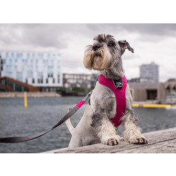 DOG Copenhagen Comfort Walk Pro Harness / Tuig NIEUW MODEL 2020