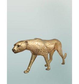 Petite Aristea – Goldfarbener Gepard