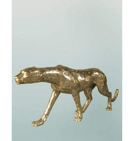 Grande Aristea – Goldfarbener Gepard