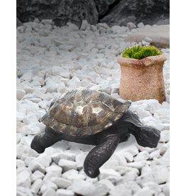 Ägidius – Bronzeskulptur einer Schildkröte
