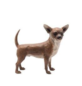 Chico – Stehender Chihuahua