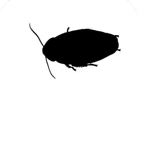 Kruipende insecten