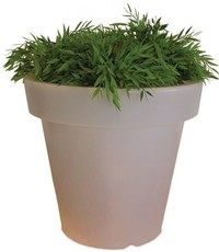 Plant with lighting