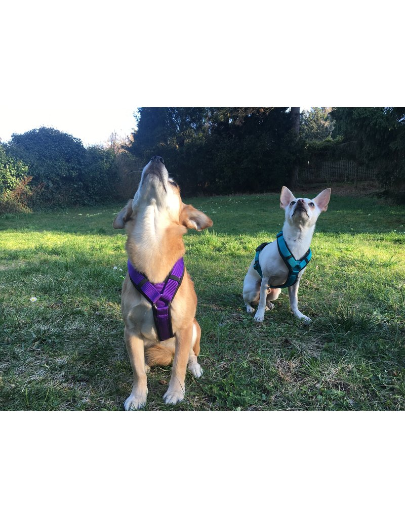 Anny X AnnyX harness for small dogs, XS, black/purple