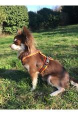 Anny X AnnyX Brustgeschirr Protect für kleine Hunde, XXS, leuchtorange/braun