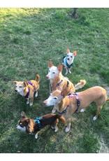 Anny X AnnyX Brustgeschirr Fun für kleine Hunde, XS, Sonderfarbe schwarz/petrol