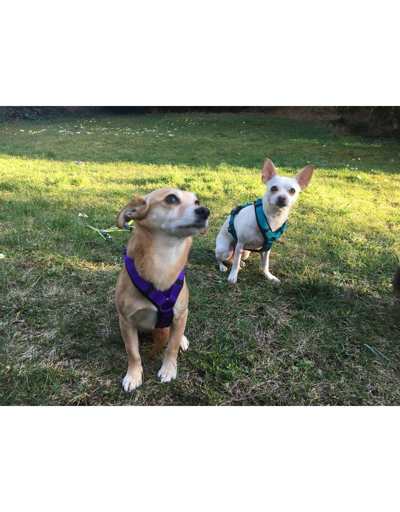 Anny X AnnyX Brustgeschirr Fun für kleine Hunde, XS, Sonderfarbe schwarz/violett