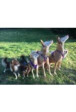 Anny X AnnyX Geschirr Protect für kleine Hunde, XS, Sonderfarbe leuchtpink/grau