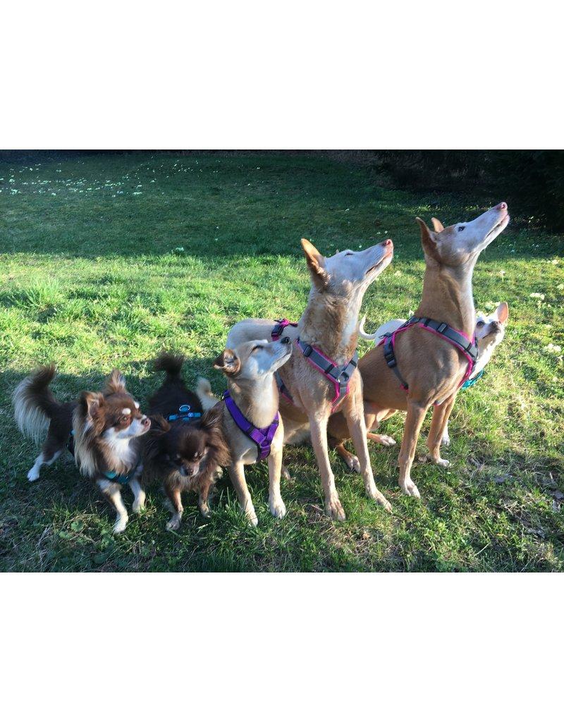 Anny X AnnyX Geschirr Protect für kleine Hunde, Sonderfarbe leuchtgrün/grau