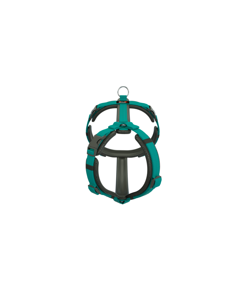 "Dogfellow harness ""easy"" for small dogs - black/teal"