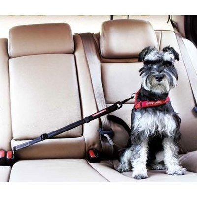 Autogordel voor honden