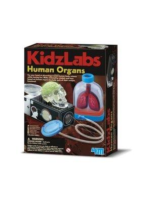 Experimentenset - KidzLabs - Menselijke organen