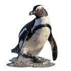 Madd Capp Madd Capp - Puzzel - Posterformaat - Pinguin - 76x61cm - 100st.