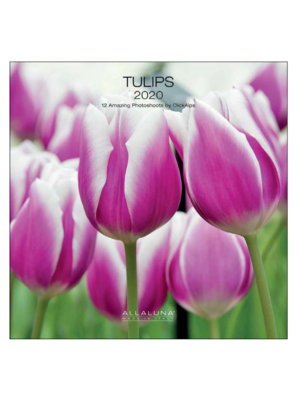Comello Comello - Maandkalender - Tulips - 2020 - 30x30