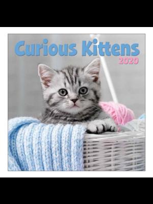 Comello Comello - Maandkalender - Curious kittens - 2020