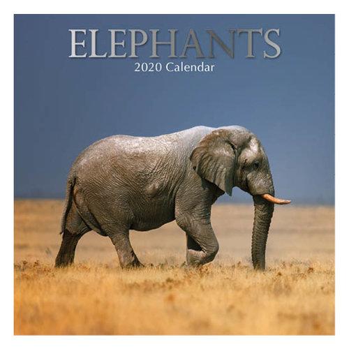 Comello - Maandkalender - Elephant - Olifant - 2020 - 30x30