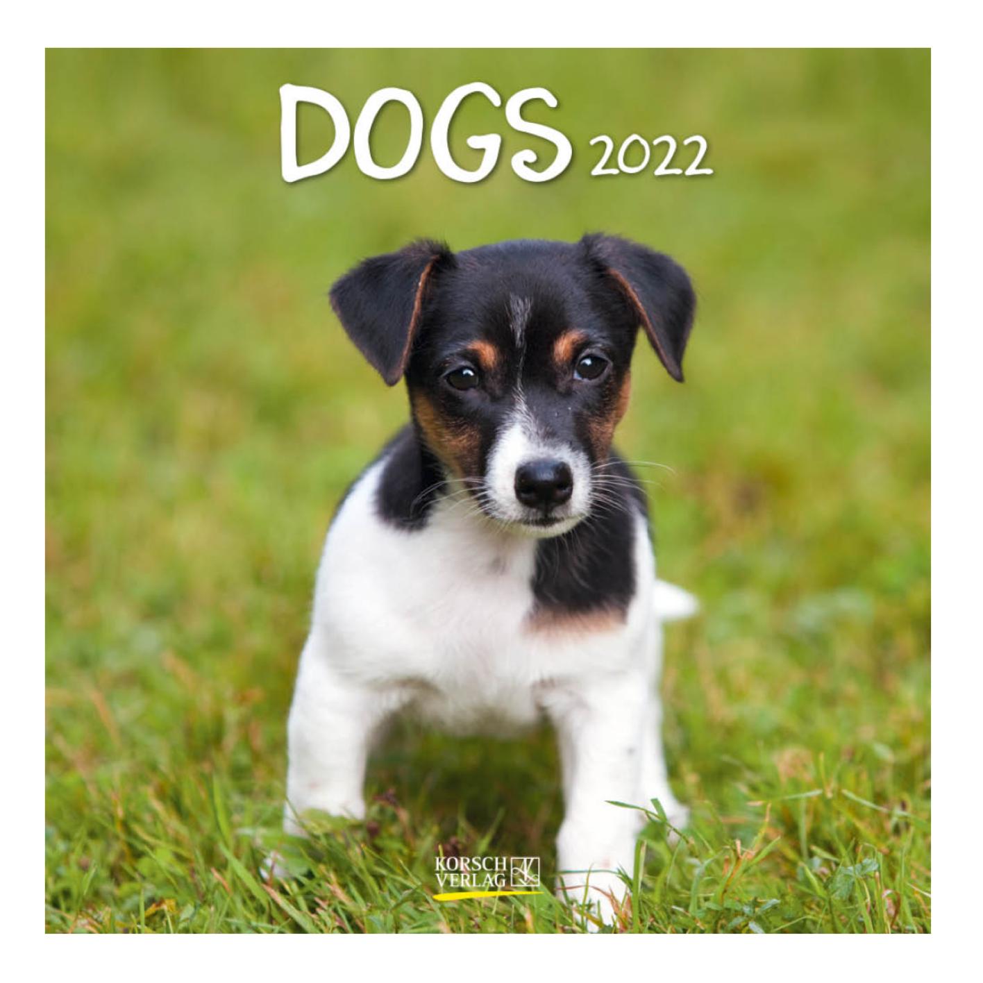 Kalender - 2022 - Honden - 30x30cm - in Kalenders