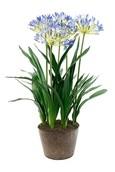 Kunstplant Agapanthus Soiled blue