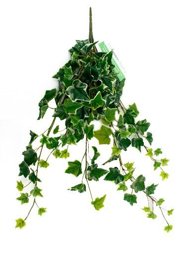 Kunstplant Ivy Green/white hanging bush - Zijdeplant