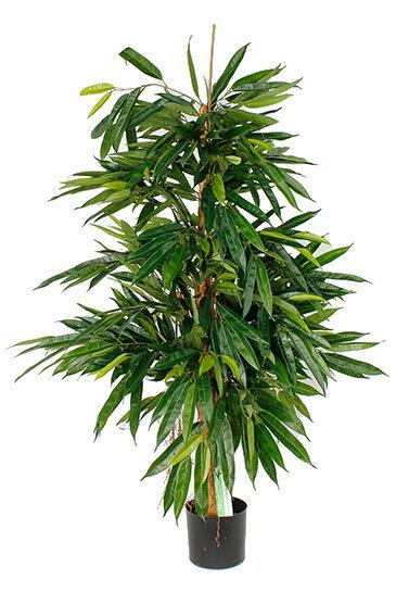 Kunstboom Longifolia - (Zijdeplant)