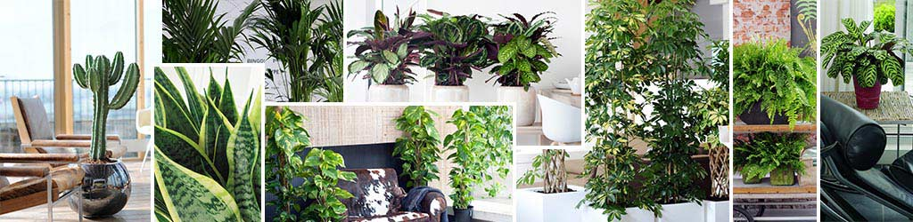 Binnenplanten kopen kopen