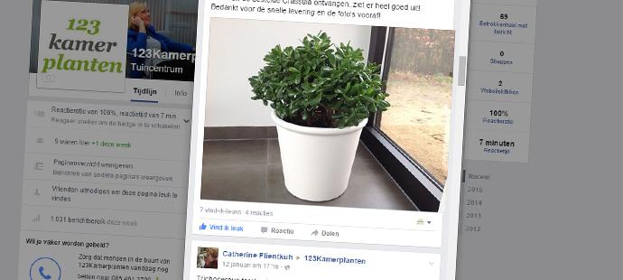 Sansevieria met plantenbak kopen