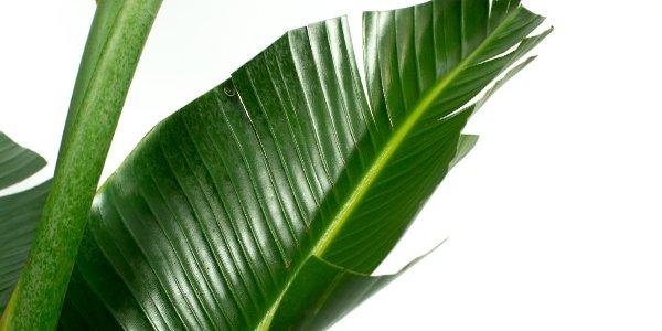 Exclusieve palmen kopen