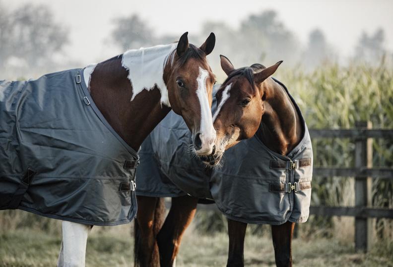 Kies uw paardendeken by Kentucky