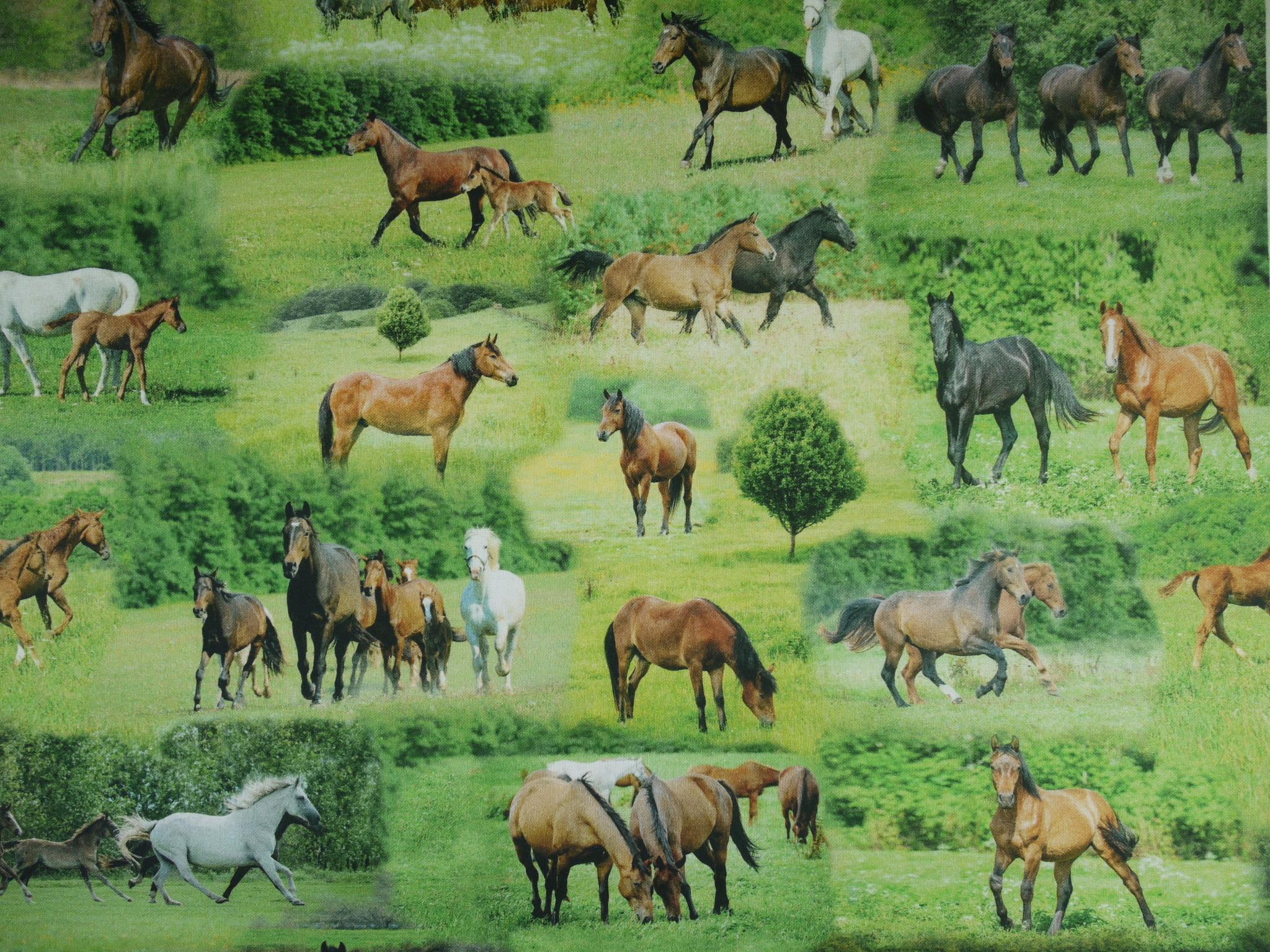 Stoff Pferde auf der Koppel (Tiffi)