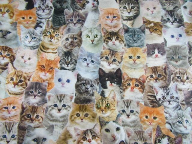 """Stoff """"Katzenkinder"""", Digitaldruck"""