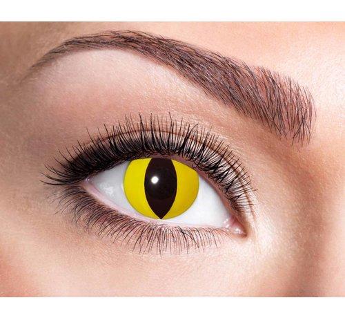 Eyecatcher Yellow Cat | Jaarlenzen