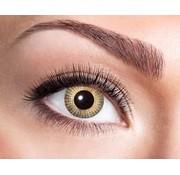 Eyecatcher Gold Dots | Jaarlenzen