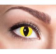 Eyecatcher Yellow Cat | 3 month lenses