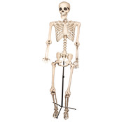 Partyline Skeleton on a stand | Decoration skeleton 155cm | Halloween decoration