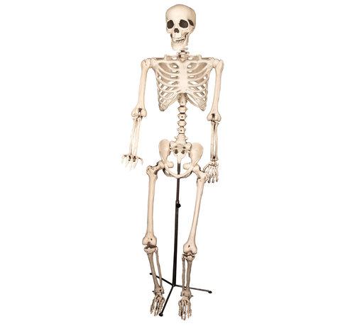 Partyline Squelette sur un stand | Décoration squelette 155cm | Décoration d'Halloween