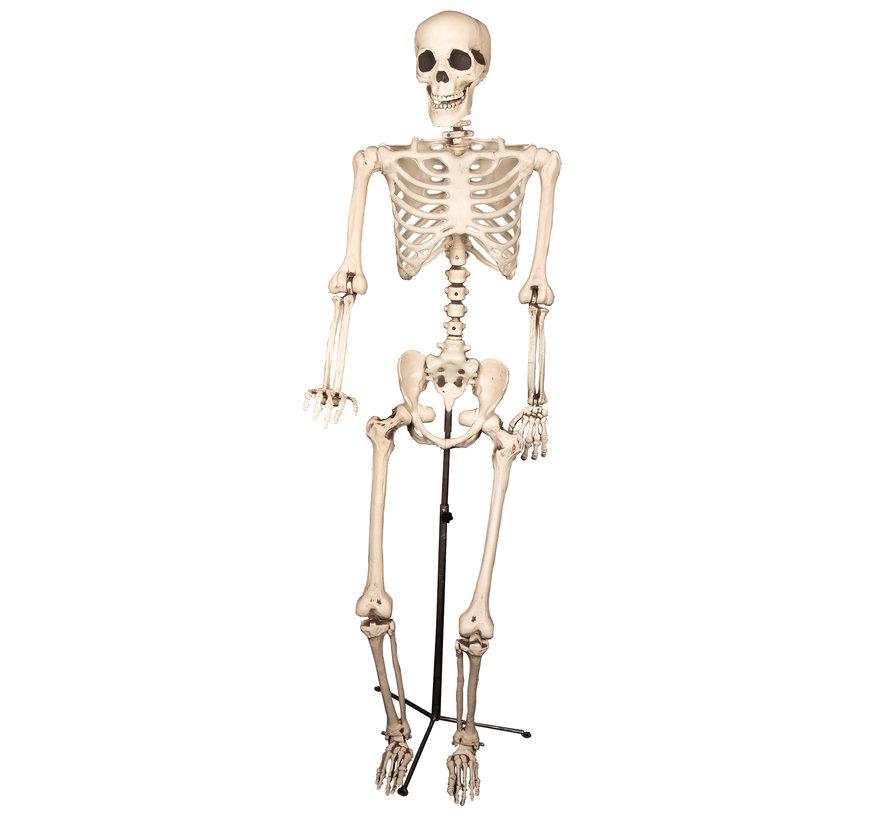 Squelette sur un stand | Décoration squelette 155cm | Décoration d'Halloween