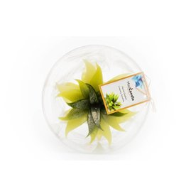 MadCandle Bougie fleur grosse pomme